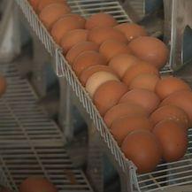 Uzlet proizvodnje jaja iz slobodnog uzgoja - 8