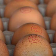 Uzlet proizvodnje jaja iz slobodnog uzgoja - 9
