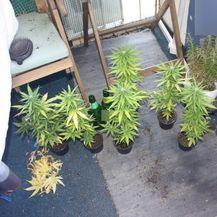 Kod dvije žene policija pronašla više od tri kilograma marihuane - 3
