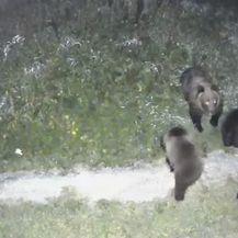 Medvjedi i divlje svinje s mladuncima u dvorištu obiteljske kuće - 2