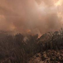 Kalifornijski vatrogasci aluminijskom folijom omataju sekvoje da ih zaštite od požara - 4