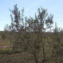 Poljoprivreda postaje ekološki održivija - 4