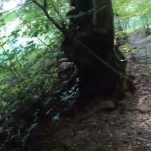 Opasne zamke u šumi - 2