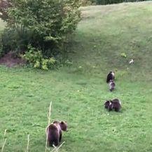 Snimke medvjedice s mladuncima - 1