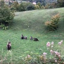 Snimke medvjedice s mladuncima - 2
