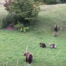 Snimke medvjedice s mladuncima - 3