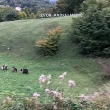 Snimke medvjedice s mladuncima - 4