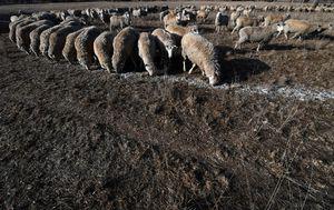 Suša u Australiji (Foto: AFP)