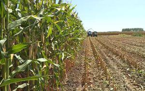 Klimatske promjene i poljoprivreda (Foto: Dnevnik.hr)