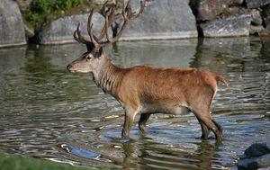 Jedna od teorija kaže da su se nesretne životinje uspaničarile na nepoznatom teritoriju (FOTO: Profimedia/Ilustracija)