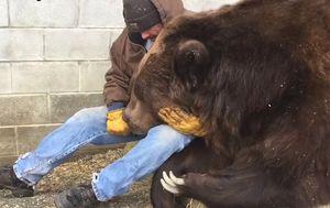 Jimbo je zbog bolesti i posjete veterinara posljednjih dana bio neraspoložen (FOTO: YouTube/Screenshot)