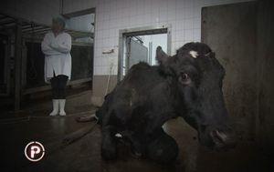 Afera meso iz Poljske (Foto: Dnevnik.hr) - 5