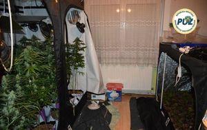 Policija otkrila laboratorij marihuane (Foto: PUZ) - 3