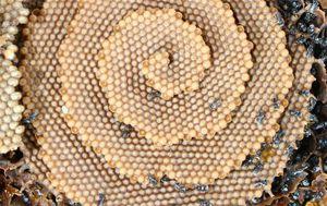Spiralna košnica (Foto: Tim Heard/Reddit)