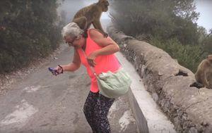 Napadi životinja (Foto: Screenshot/YouTube)