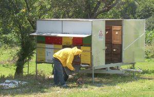 Pčelinji otrov (Foto: Dnevnik.hr)