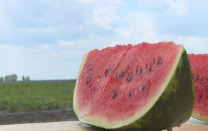 Zašto je uvozna lubenica jeftinija od domaće? (Foto: Dnevnik.hr) - 2