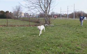 Trovanje pasa u Osijeku (Foto: Dnevnik.hr) - 3