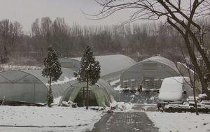 Zima na početku proljeća donijela štete (Foto: Dnevnik.hr) - 1
