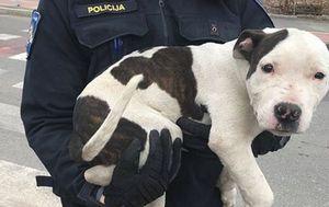 Nesretnog psa vlasnik je divljački pretukao (Foto: Facebook/Noina Arka)