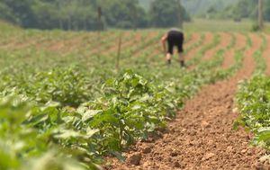 Kosinj - nakon poplave, poljoprivredni radovi (Foto: Dnevnik.hr)
