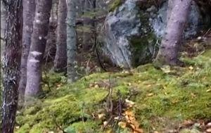 Šuma (Foto: Screenshot/YouTube)