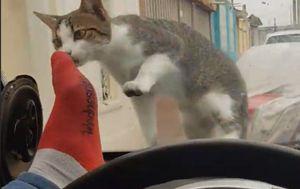 Mačka (Foto: Screenshot/Facebook)
