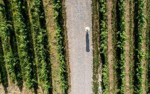 Hrvatska vinska priča u finalu natjecanja američkog Wine Spectatora - 3