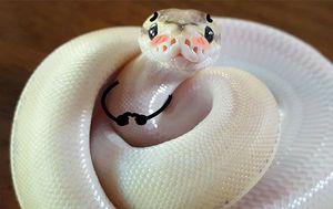 Smiješne zmije (Foto: boredpanda.com)