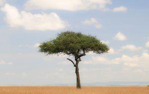 Afrička savana - ilustracija - 2