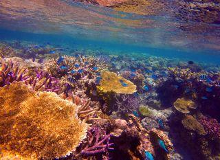 Veliki koraljni greben - 5