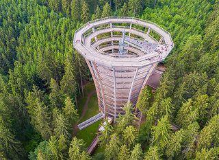 Treetop Walk Pohorje - 9
