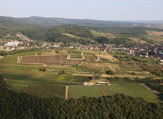 Kutjevačko vinogorje