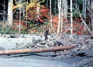 Bigfoot - 3