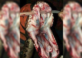 Građanima, srećom, ipak ne prijete po život opasne zmije (FOTO: Facebook)