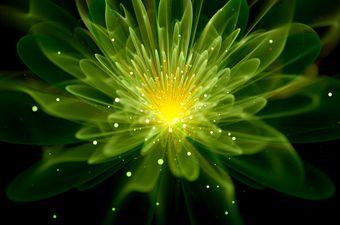 Svjetlost iz biljaka, ilustracija