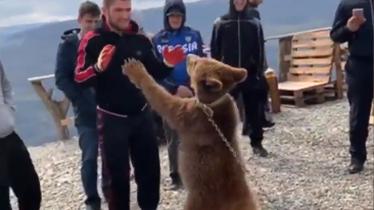 Habib Nurmagomedov ponovno sparira s medvjedom