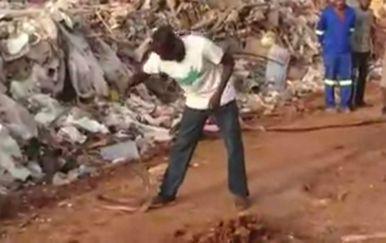 Mozambička pljujuća kobra zna glumiti da je mrtva kada se nalazi u opasnosti (FOTŽO: Screenshot)