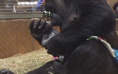 Presretna Calaya odmah je izljubila svoju prvu bebu (FOTO: YouTube/Screenshot)
