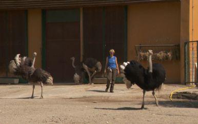 Zoološki vrtovi žele unaprijediti zanimanje timaritelja (Foto: Dnevnik.hr) - 4