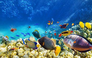 Koraljni greben (Foto: Guliver/Thinkstock)