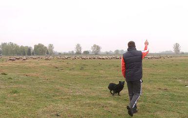 Ovčarstvo u Marijancu (Foto: Dnevnik.hr)