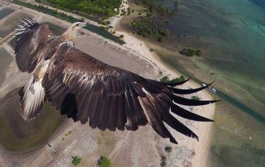 Ptičja perspektiva (Foto: izismile.com) - 13