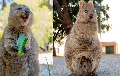 Australske životinje (Foto: brightside.me)