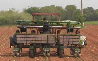 Poljoprivredna e-iskaznica (Foto: Dnevnik.hr)