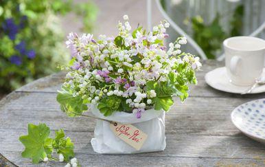 Đurđice se smatraju cvijetom svih osoba rođenih u svibnju