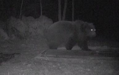 Medvjedi haraju Vinodolskim zaleđem (Foto: Dnevnik.hr) - 3