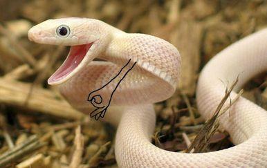 Šašava zmije (Foto: boredpanda.com)