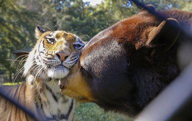 Pravo prijateljstvo (Foto: brightside.me) - 6