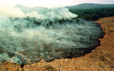 Požar u Amazonskoj prašumi (Foto: AFP)
